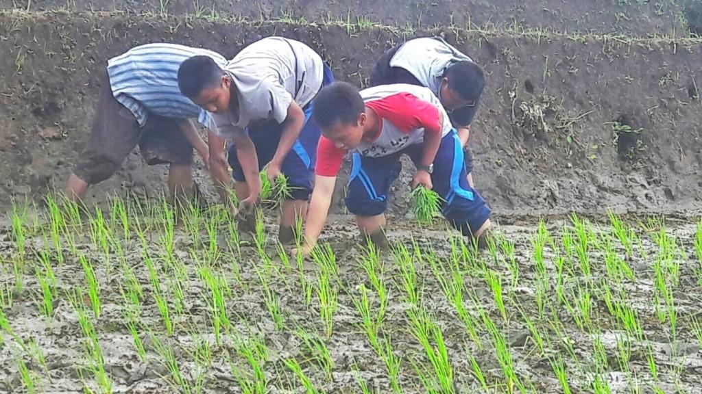 (foto: Husen) Siswa membantu menanam padi.